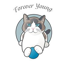 Forever Young Playful Snowshoe Cat Photographic Print