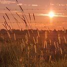 Dancing grass at sunset... by Mauds