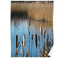 Water Reeds Poster