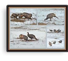 Wild Turkeys - Meleagris gallopavo Canvas Print