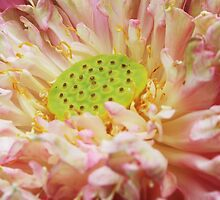 Magic Lotus by AroundOurWorld