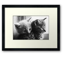 Orphan cats 2 Framed Print