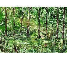 Emerald Glade Photographic Print