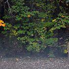 Backyard Visitor by karineverhart