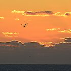 Gold at Sunrise by karineverhart
