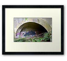 Graffiti under a bridge - Framed Print