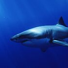 Great White by Mikeb10462