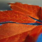 Leaf on water by AlexTorres