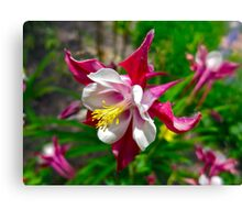 """Columbine in Vail, Co"" Canvas Print"