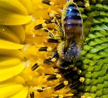 Bee on Sunflower by Wesley Farnsworth