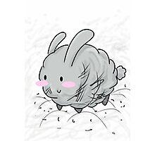 Dust Bunny!  Photographic Print