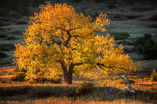 Tree of Light by Jarrett720