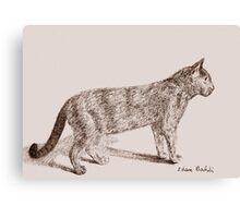 Retro Cat Sketch (Old Nostalgic Book Style) Canvas Print