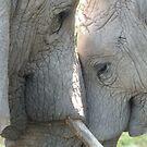 Nandi & Thandi by LeaGerard