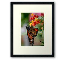 Butterfly 13 Framed Print