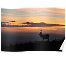 Lone stag at sunrise Poster