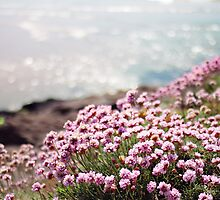 Thrift at Polzeath Beach (May) by cornishwhippet