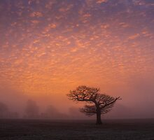 Lone tree on Ladle Hill by herbpayne