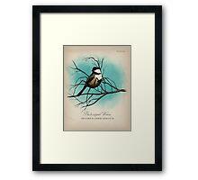 Black-capped Widow Framed Print