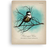 Black-capped Widow Canvas Print