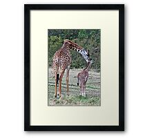 Cow And Calf Framed Print