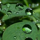 Rain Drops by Joey Kuipers