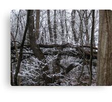 Contrast of White Snow Against the Dark Trees Canvas Print