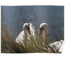 Swans at Newtown Creek Poster