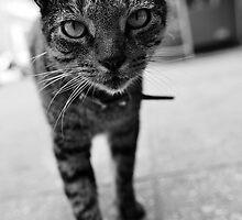 B&W Cat by Lex Aku