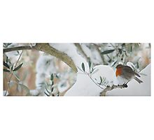 Snow's Robin, Southern France Photographic Print