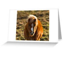 SCOTTISH SHETLAND PONY Greeting Card