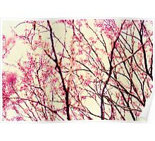 blossom wonderland Poster
