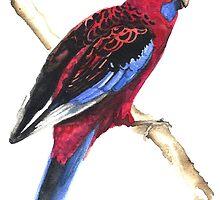 Crimson Rosella by Denise Faulkner