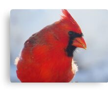 Mister Red Canvas Print