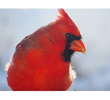 Mister Red Photographic Print