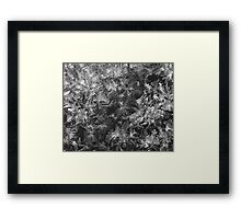 Frost on the Window Framed Print