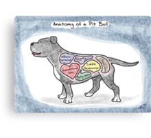 Anatomy of a Pit Bull Canvas Print
