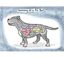 Anatomy of a Pit Bull Photographic Print