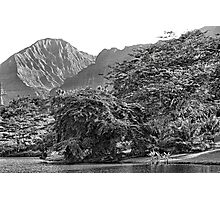 HOOMALUHIA BOTANICAL GARDEN and Pali   Photographic Print