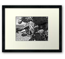©MS Nopalera VSI Monochrome Framed Print