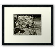 ©MS Nopalera VSII Monochrome Framed Print
