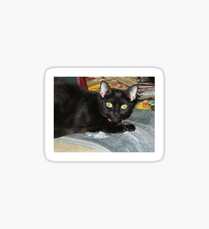 tyna the cat Sticker