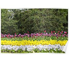 colorful flower garden Poster