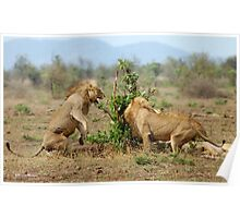 THIS IS SERIOUS - THE LION - Panthera leo - LEEU Poster
