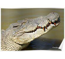 Big Crocodile Profile Photo 1 Poster