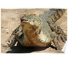 Saltwater Crocodile Crazy 3 Poster