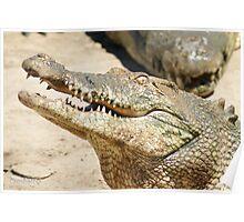 Saltwater Crocodile Crazy 4 Poster
