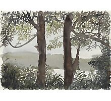 Smith's Lake Trees Photographic Print