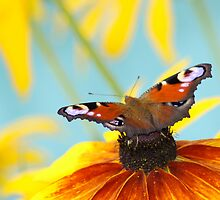 butterfly on yellow flower by Vasily