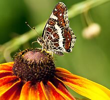 beautiful butterfly over flower by Vasily